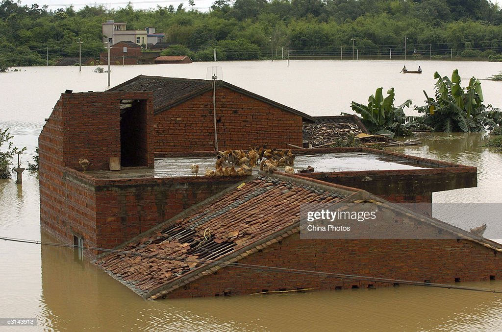 Chickens stand on the roof of a house besieged by floodwater at Taimei Town on June 24 2005 in Boluo County of Guangdong Province southern China...