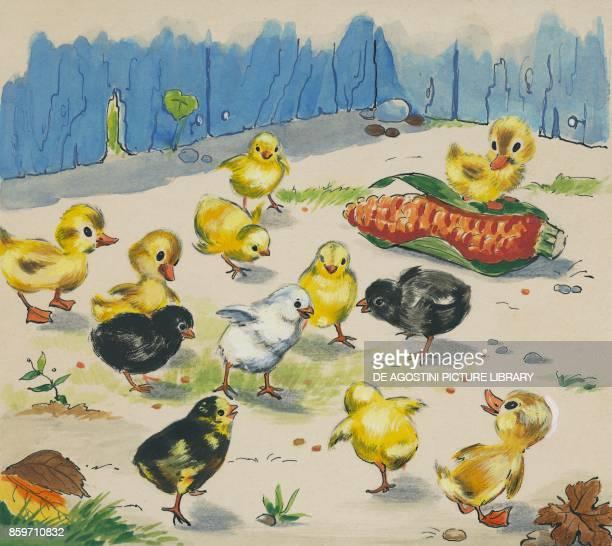 Chicks eating corn beans children's illustration drawing