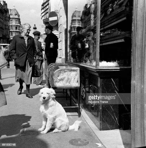 Chien assis dans une rue de Paris France en 1952