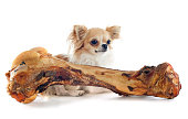 chihuahua and bone in front of white background