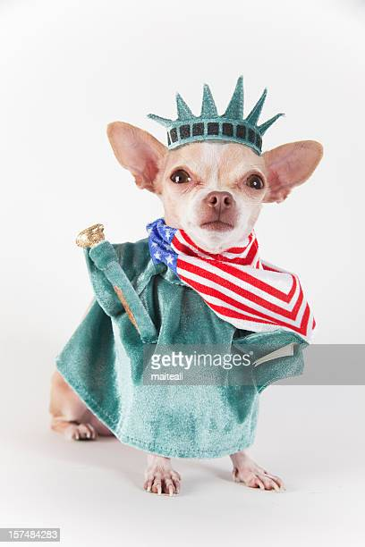 Chihuahua dog dressed up as the Statue of Liberty