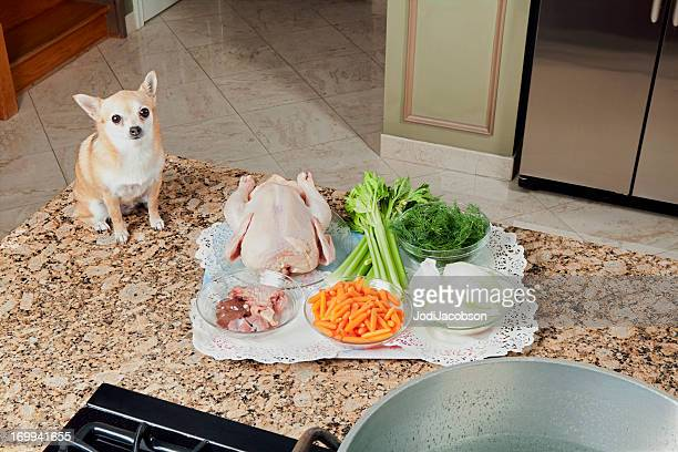 Chihuahua looking at soup ingredients