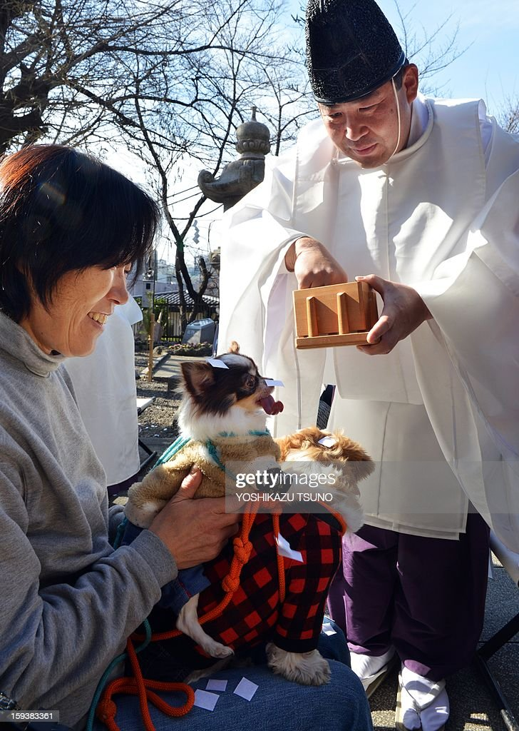 Chihuahuas, held by their owner (L) are purified by a Shinto priest (R) at the Ichigaya Kamegaoka-Hachiman shrine in Tokyo on January 13, 2013. Some 500 pet owners visited the shrine to celebrate the New Year and pray for the health and happiness of their animals. AFP PHOTO / Yoshikazu TSUNO