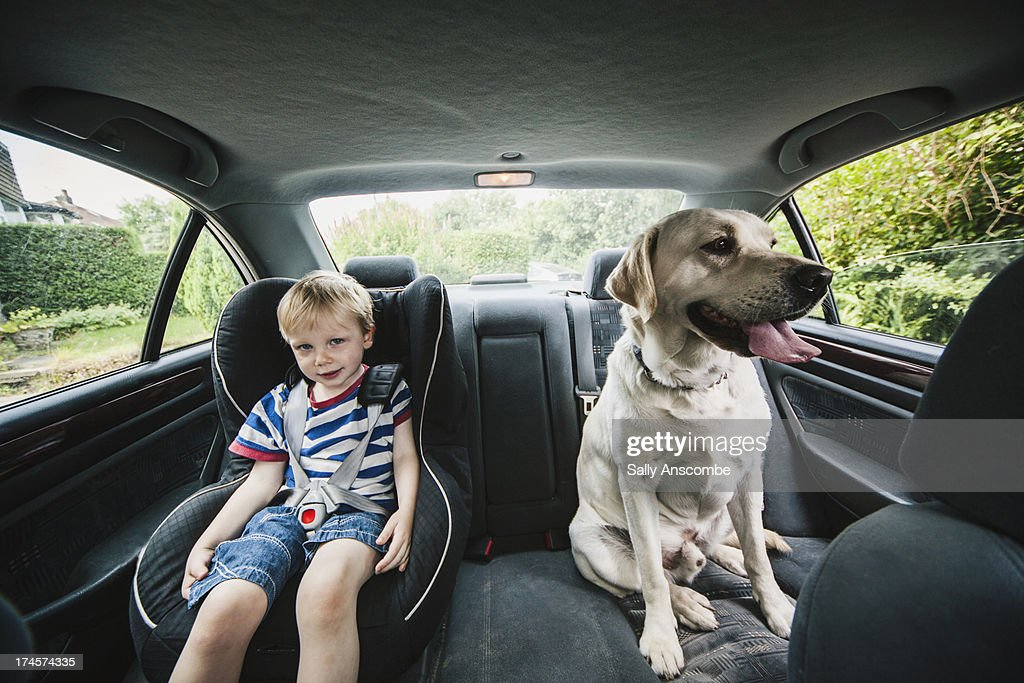 Child and dog sat in a car : Stock Photo