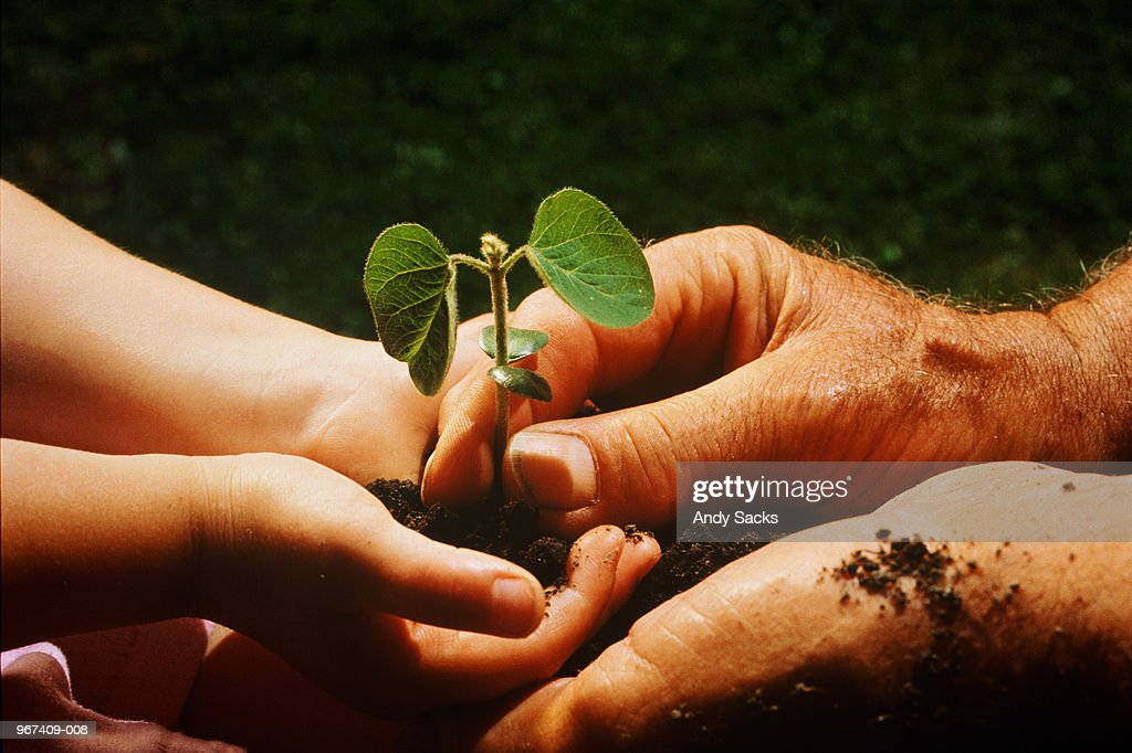 Child and man holding soya bean seedling, close-up : Stock Photo