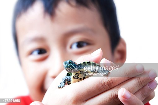 Child and turtle : Stock Photo
