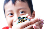 Asian boy showing his baby turtle on his hand