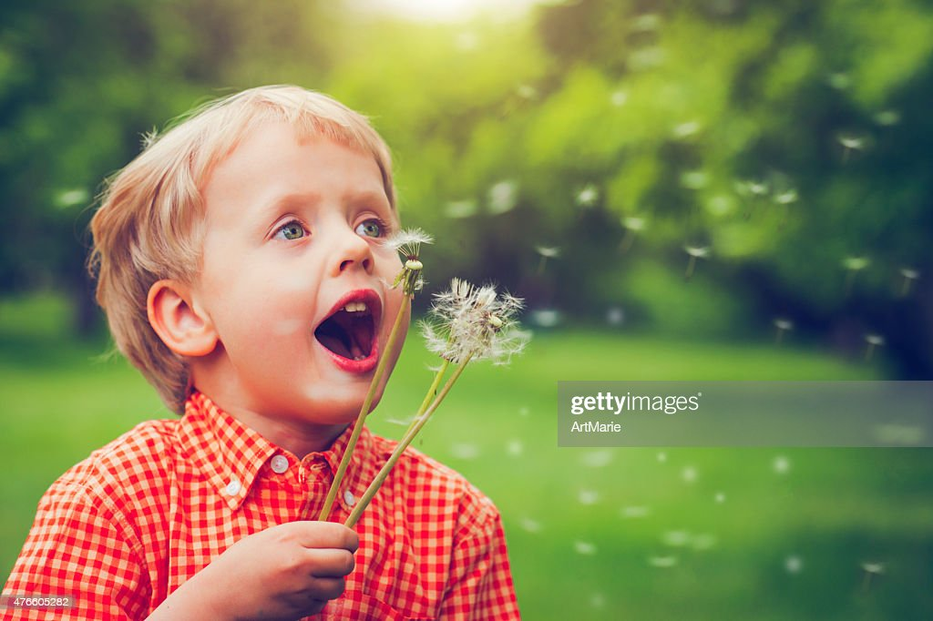Child blowing dandelion : Stock Photo