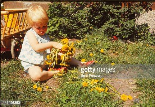 Child collecting dandelions : Stock Photo