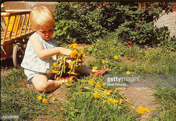 Child collecting dandelions