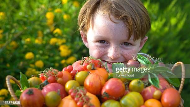 Child Gardener, Boy & Organic Homegrown Food Produce, Heirloom Tomatoes