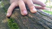 child hands on a tree trunk with mosses in the park