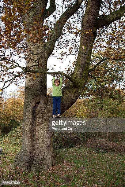 child hanging from a tree in the forest