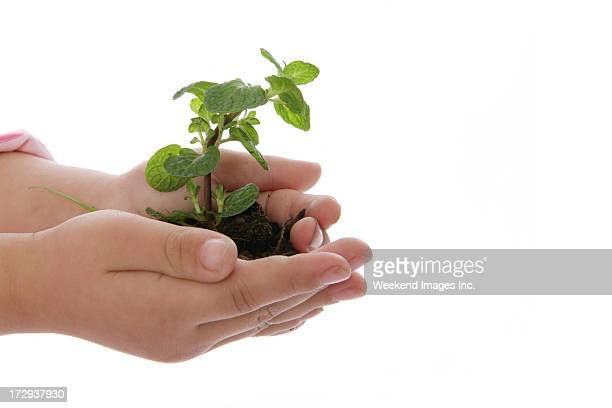 child hold a plant