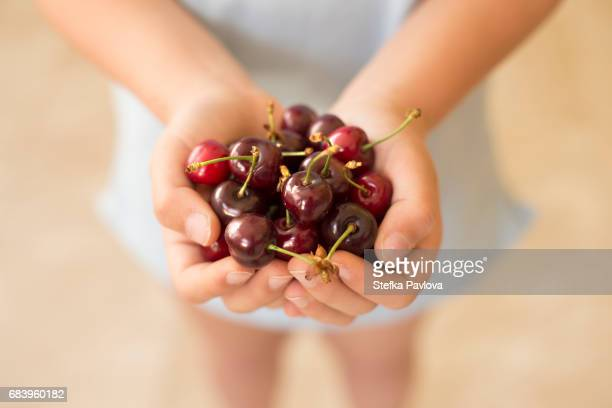A child holding a handful of red cherries close-up
