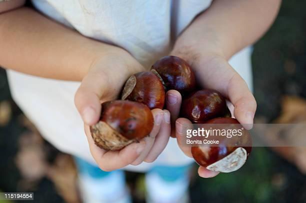 Child holding chestnuts