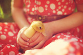 Child holding duckling