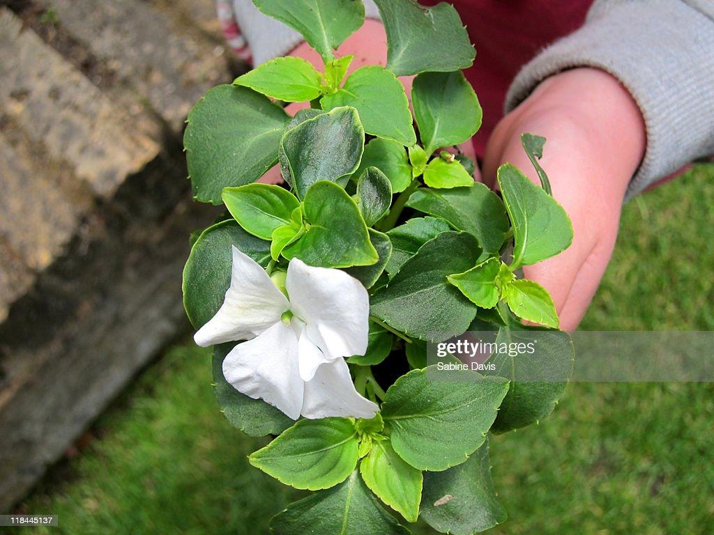 Child holding plant : Stock Photo