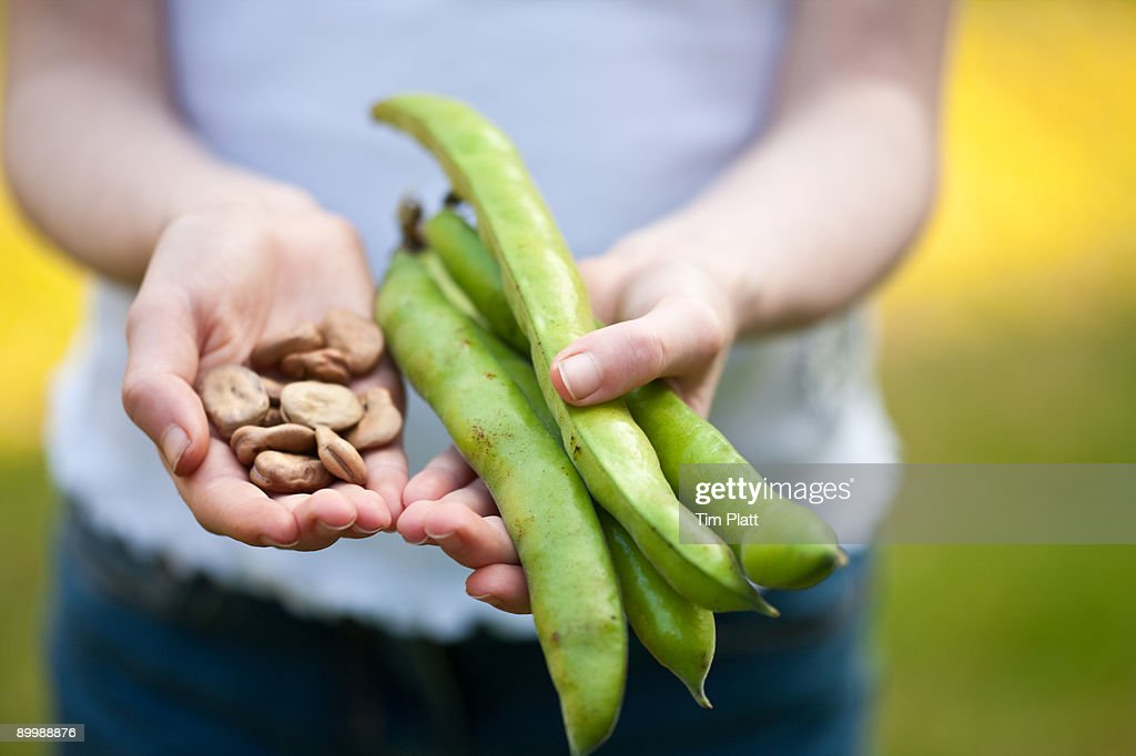 Child holding seeds and broad beans. : Stock Photo