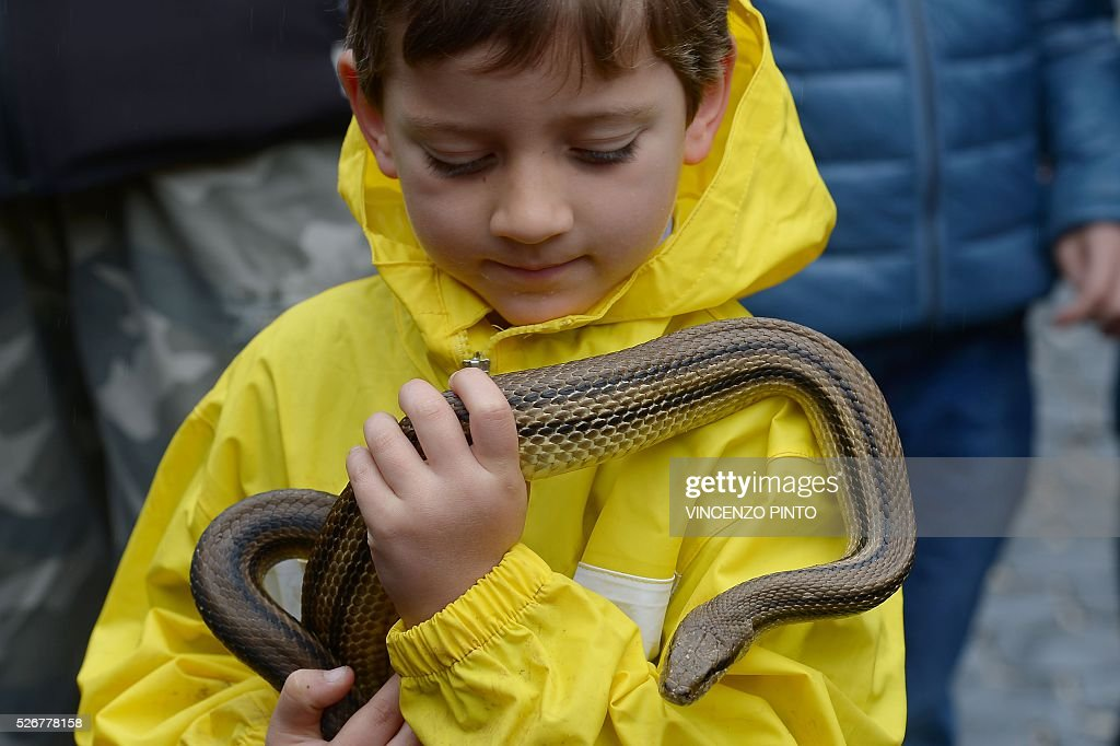 A child holds a snake before the annual procession of faithful carrying a statue of Saint Domenico covered with live snakes in the streets of Cocullo, a small village in the Abruzzo region, on May 1, 2016. / AFP / VINCENZO