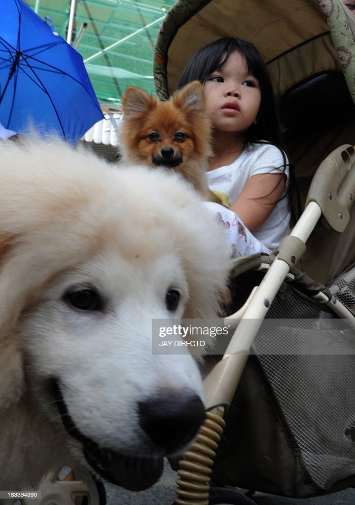 A child holds her pet dog after a Roman Catholic priest blessed animals with holy water on the first Sunday of October after a mass for World Animal Day in Manila on October 6, 2013. People around the globe celebrated World Animal Day, which began as a holiday in Florence, Italy, in 1931 at a convention of ecologists, to highlight the plight of endangered species. AFP PHOTO / Jay DIRECTO