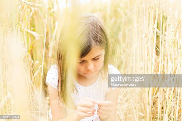 Child in a field amongst ripening crops