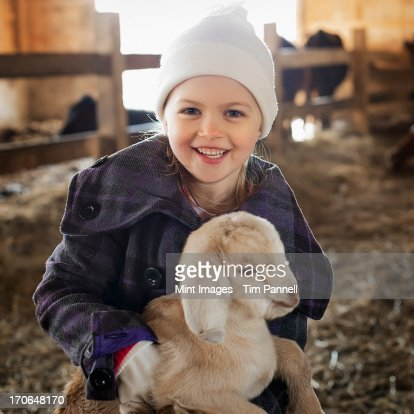 A child in the animal shed holding and stroking a baby goat. : Stock Photo