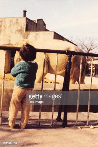 Child looking at elephant in the zoo : Stock Photo