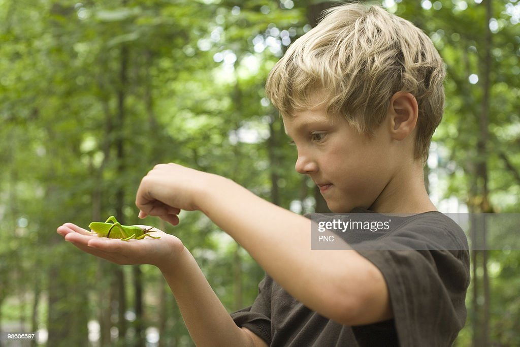 Child looking at Grasshopper : Foto de stock