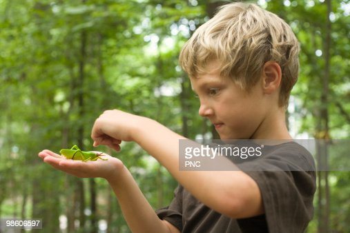 Child looking at Grasshopper : Photo
