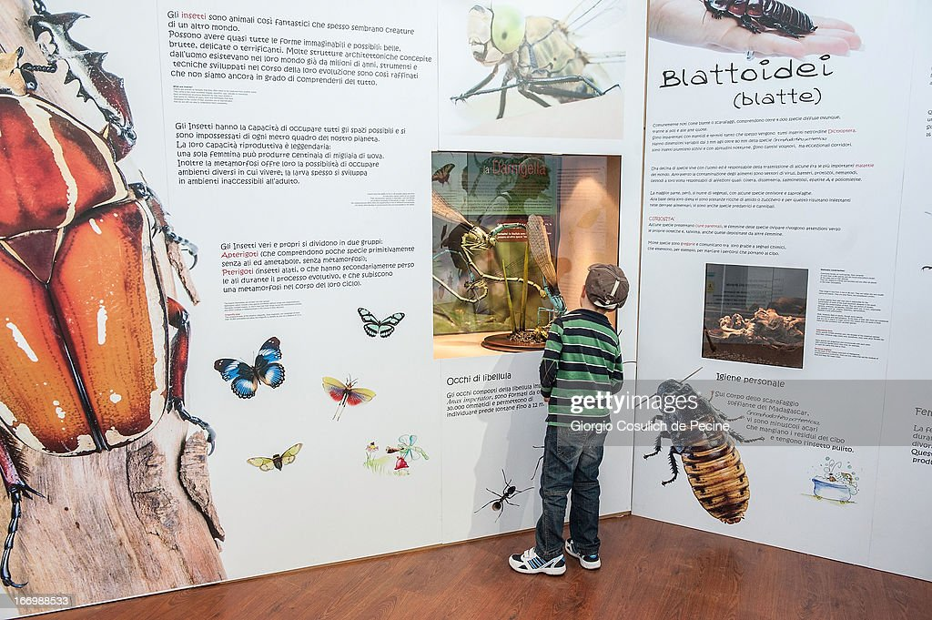 A child observes insects in glass cases during the opening of the new butterfly and insect section at the Bioparco on April 19, 2013 in Rome, Italy. A new greenhouse measuring 80 square metres will be unveiled at the capital's famous zoological gardens, where visitors will be able to walk amongst tropical butterflies and a variety of insects.