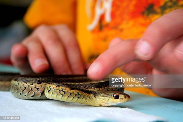 Child petting garter snake