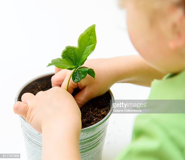 Child planting a new plant