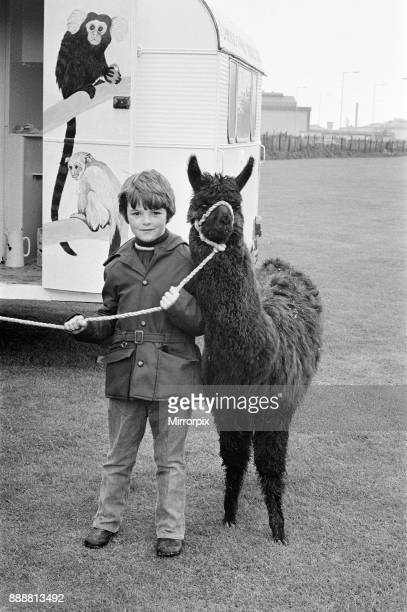 A child playing with a Llama at the ICI gala day 1972