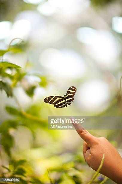 Child points to butterfly