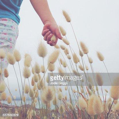 Child running hand through Hare's-tail Grass
