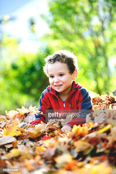 Child sitting in a pile of leaves in the fall