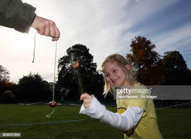 A child takes part in a Guinness World Record attempt for the most simultaneous conker matches at one time at the RHS Garden Wisley near Woking Surrey