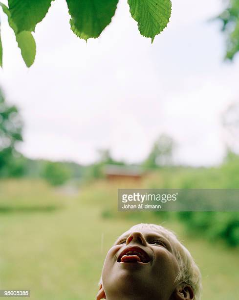 A child tasting the raindrops from a tree Sweden.