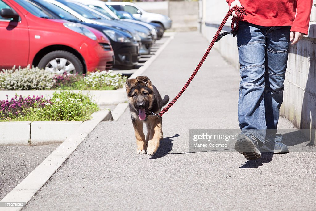 Child walking in the street with his dog on leash : Stock Photo