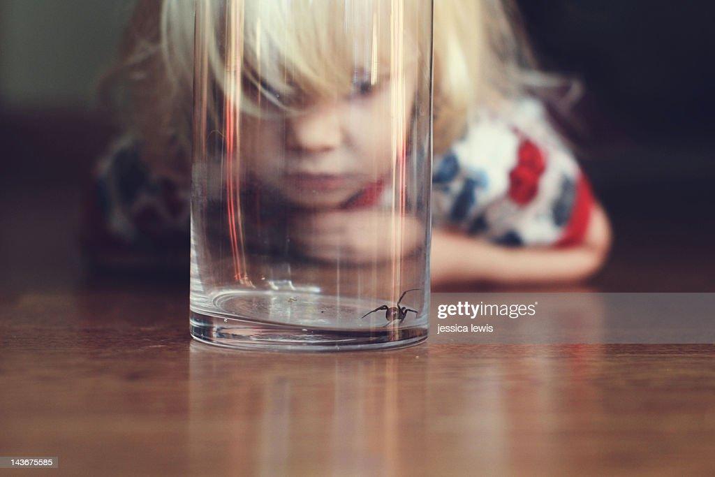 Child watching black widow spider