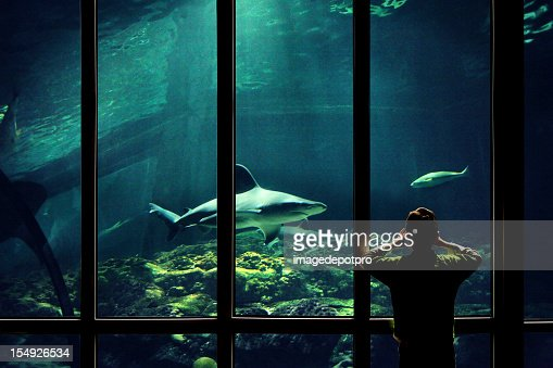 child watching sharks in aquarium