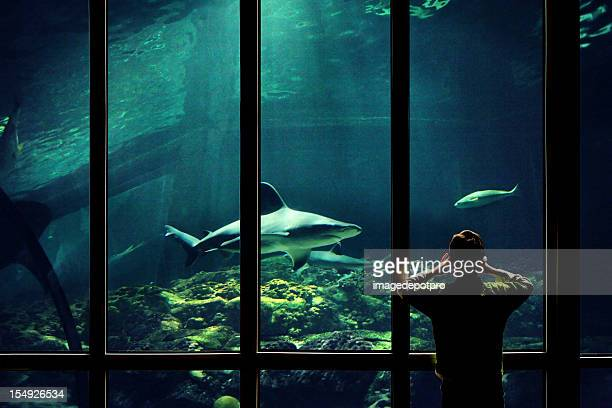 child watching sharks in aquarium