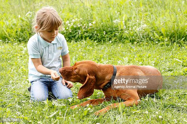 A child with a dog on a meadow