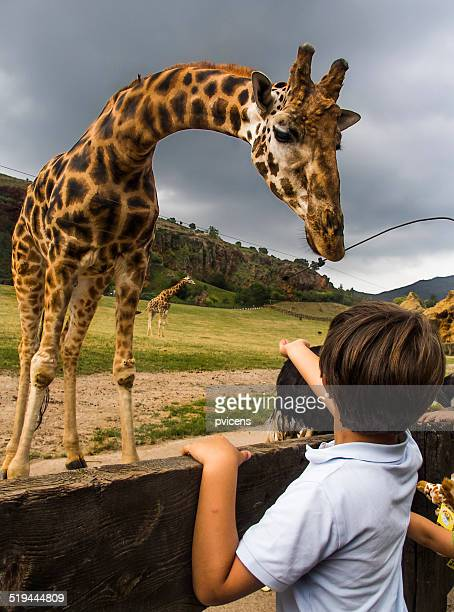 Child with giraffe