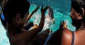 Child Yairo Cruz works with dolphins during a therapy session on May 26 2014 at the National Aquarium in Havana As part of a rehabilitation project...