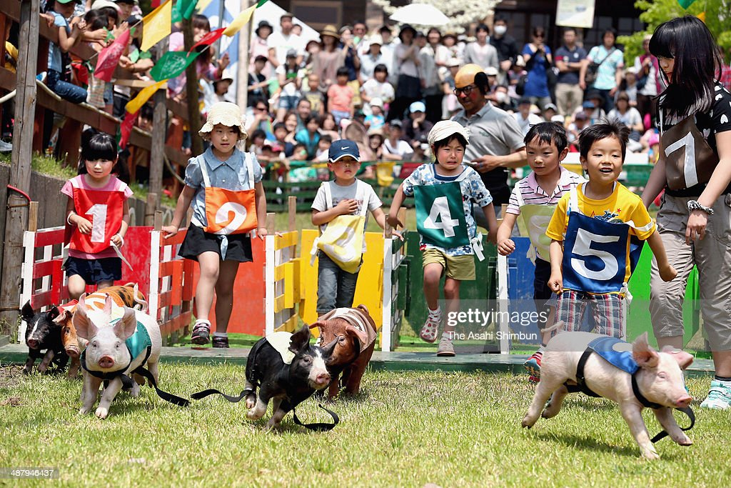 Children and miniature pigs competes during the Mini Pig Derby at Mokumoku Tezukuri Farm on May 3, 2014 in Iga, Mie, Japan. Japan is in the holiday season of the 'Golden Week' until May 6.