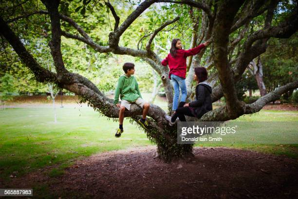 Children and mother climbing tree branches in park