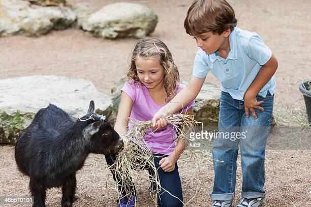 Children at petting zoo