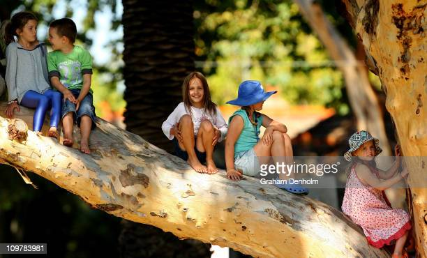 Children climb a tree to get a better view of the action during the 'Batting for the Battlers' Celebrity Charity Cricket Match at Peanut Farm Oval on...